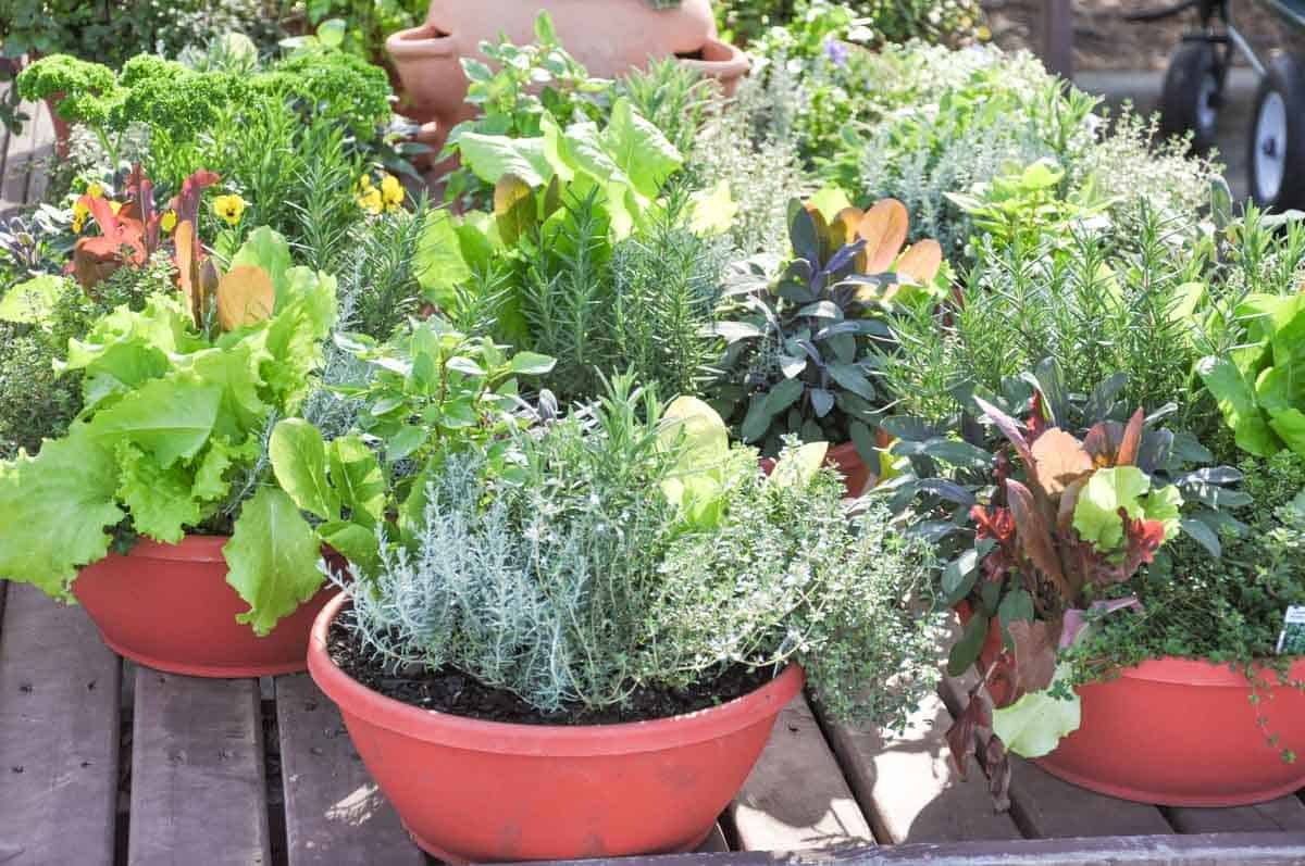 A cluster of red containers on a porch hold various vegetable plants.