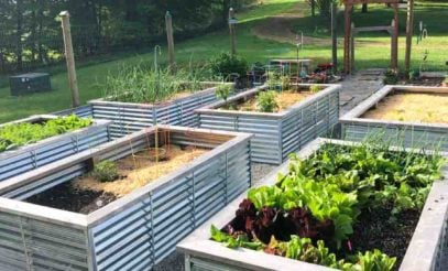 Corrugated metal raised beds in a sunny garden location.