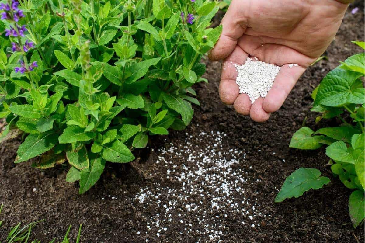 A hand sprinkles soil amendment over soil as a part of regular garden maintenance.