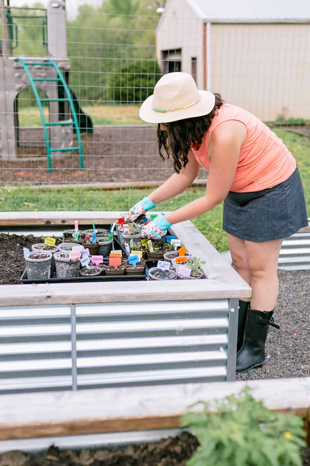 Brunette woman bent over a tray of seedlings set into a raised bed.