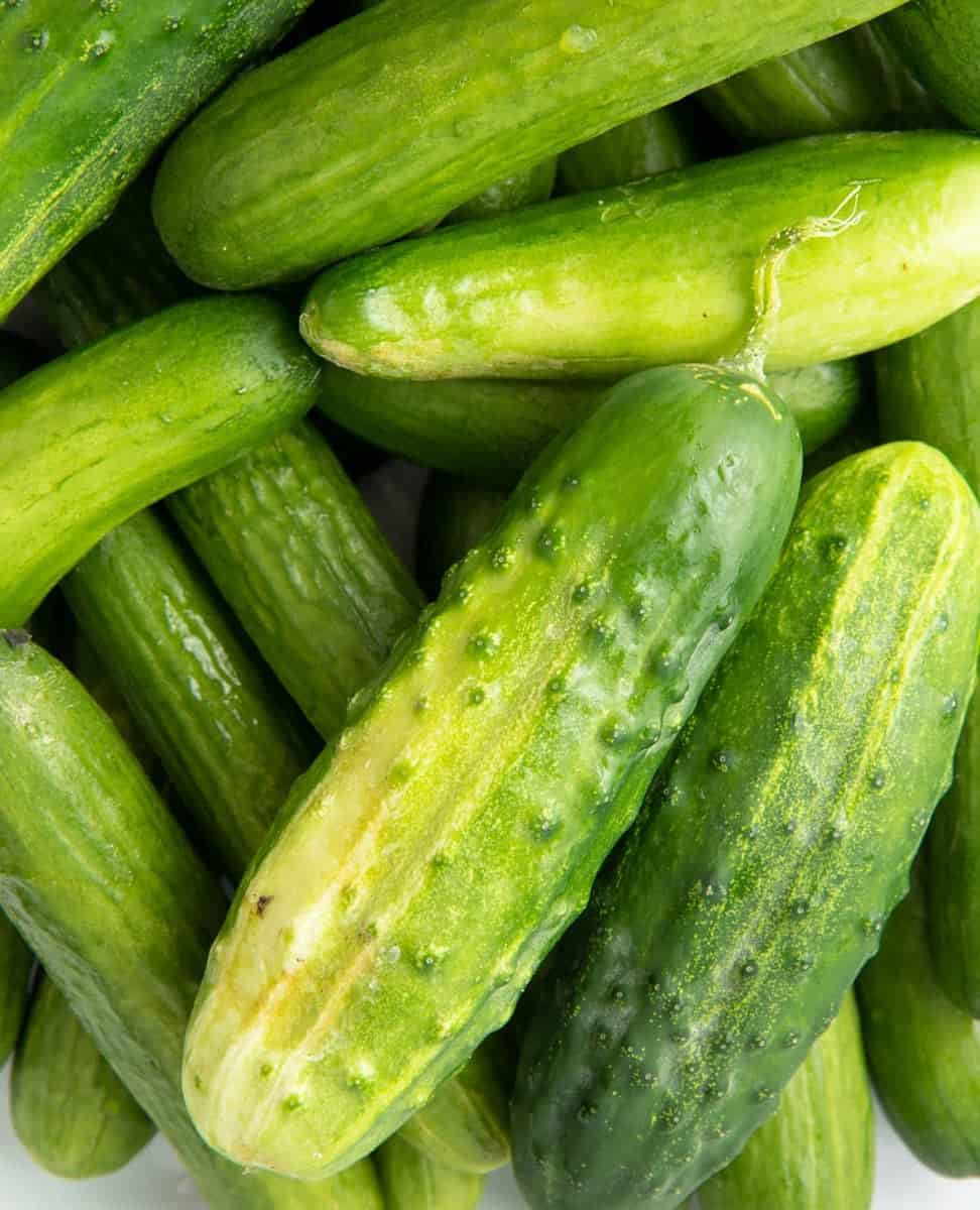 Close up of a pile of garden cucumbers.