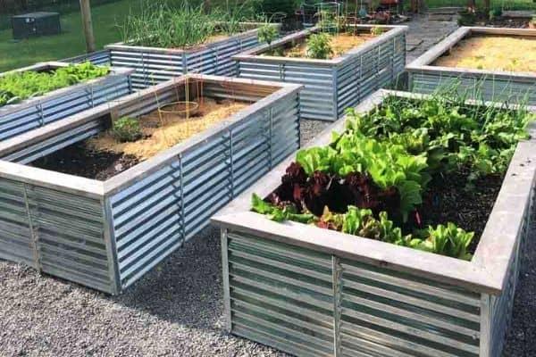 Galvanized steel garden beds