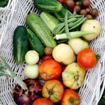 Various vegetables are piled in a white harvest basket.