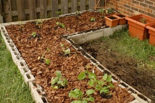Cinder blocks form the outer edges of a raised garden bed for an emergency vegetable garden.