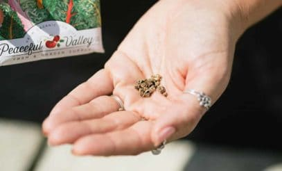 Hand holding Swiss chard seeds next to a seed packet.
