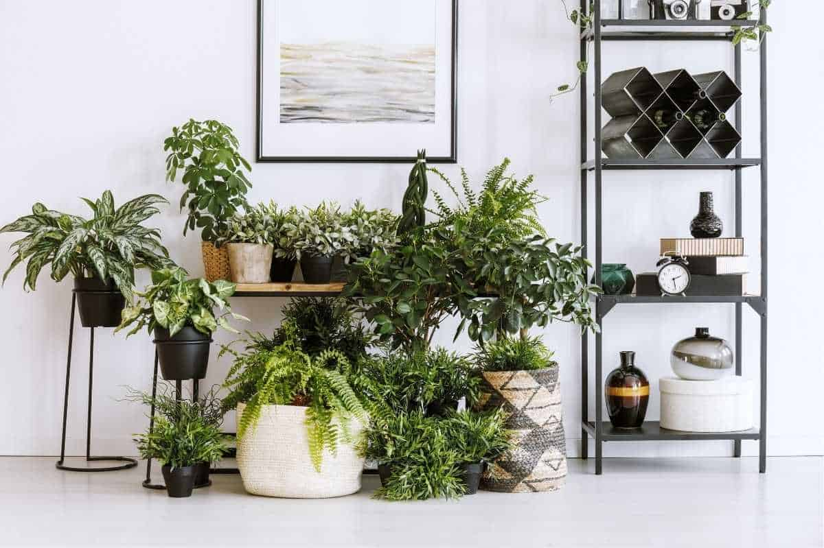 Houseplants fill a variety of planters on the floor in front of a table, and on the table itself.