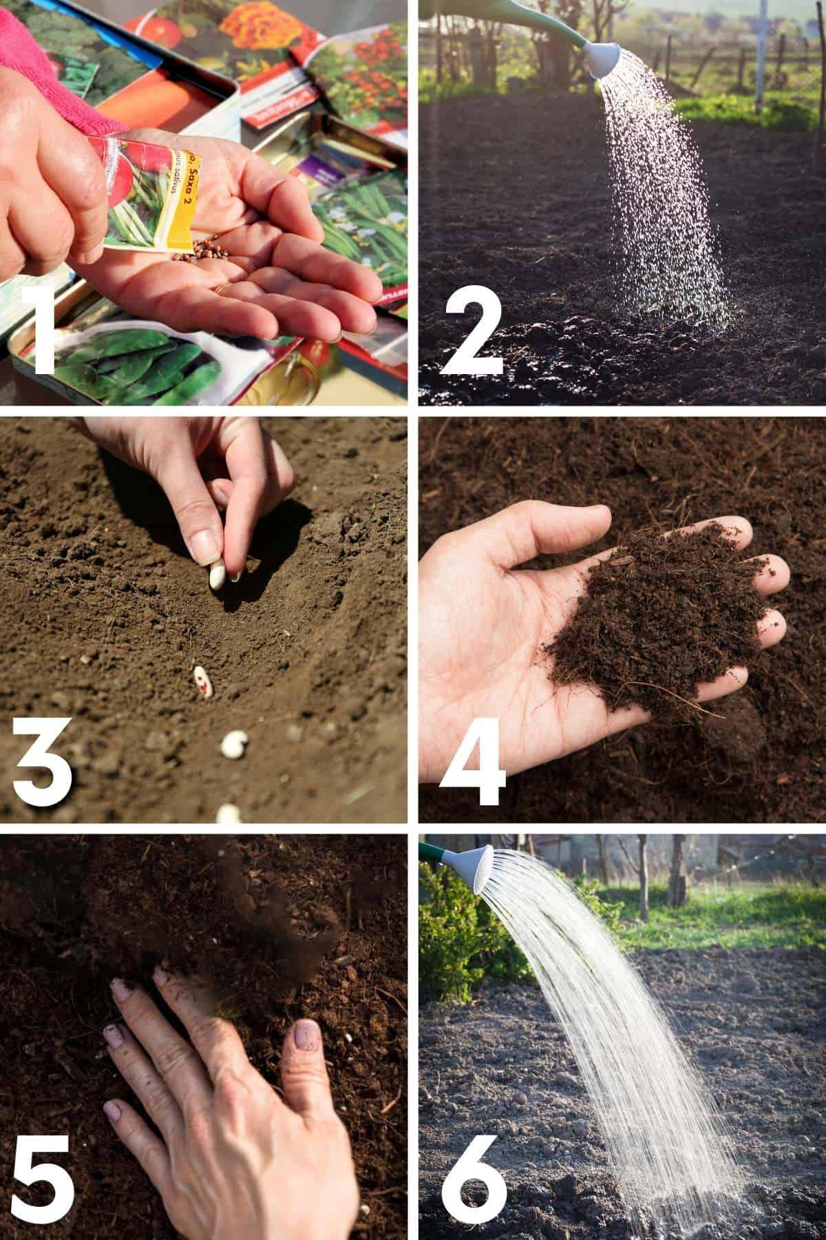 Step by step image of how to direct sow seeds in the garden.