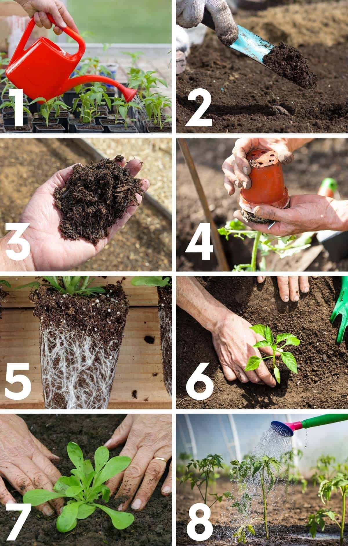 Step by step image of how to plant seedlings