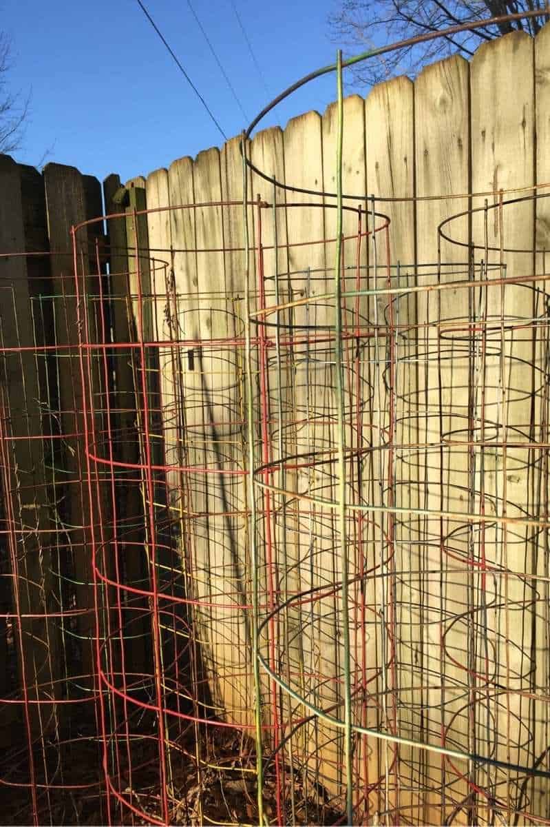 Large tomato cages are clustered next to a fence.