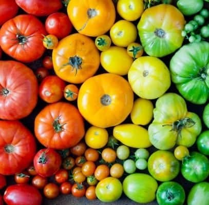 Heirloom tomatoes arrayed in rainbow order