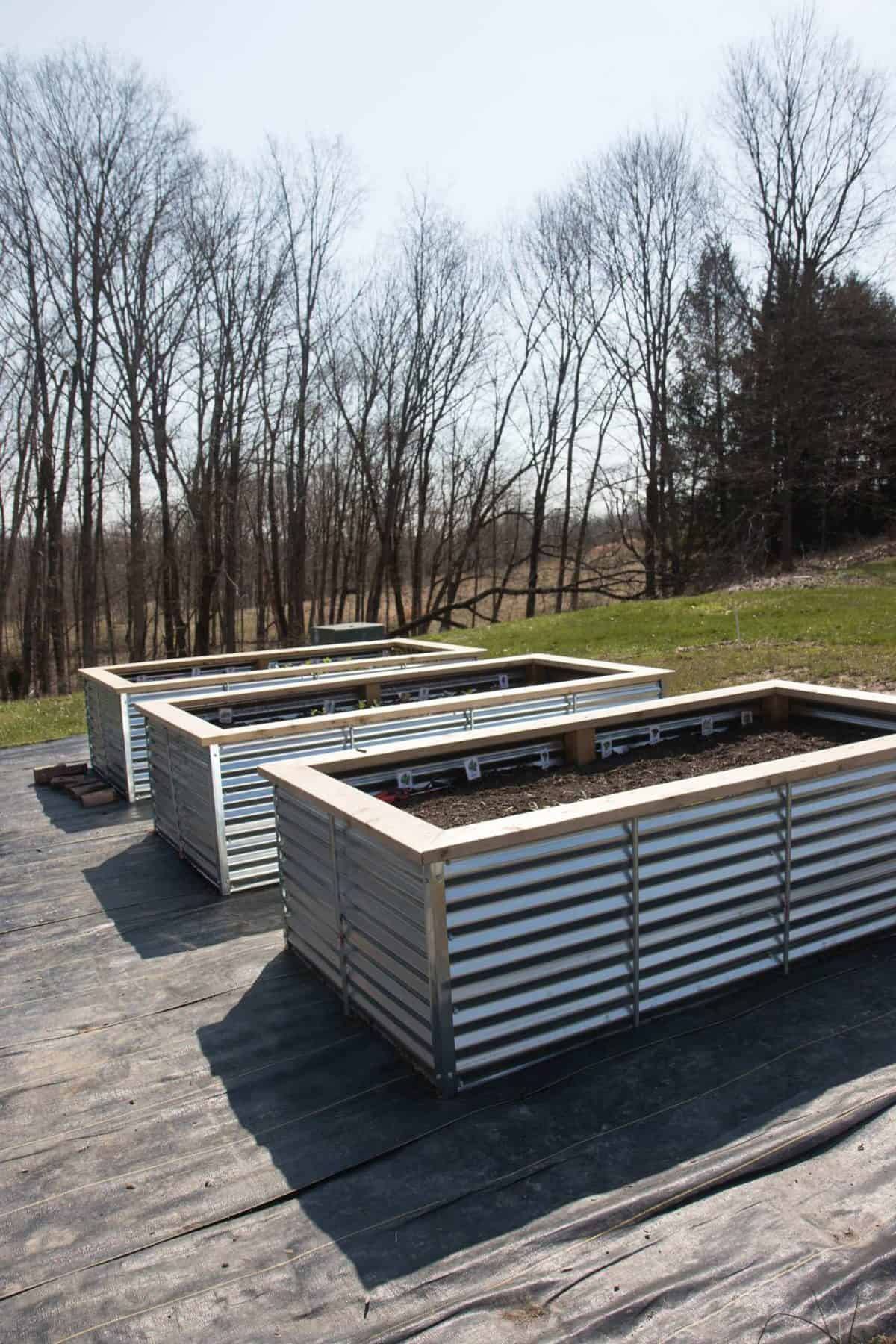 Three galvanized steel raised garden beds lined up on landscape fabric