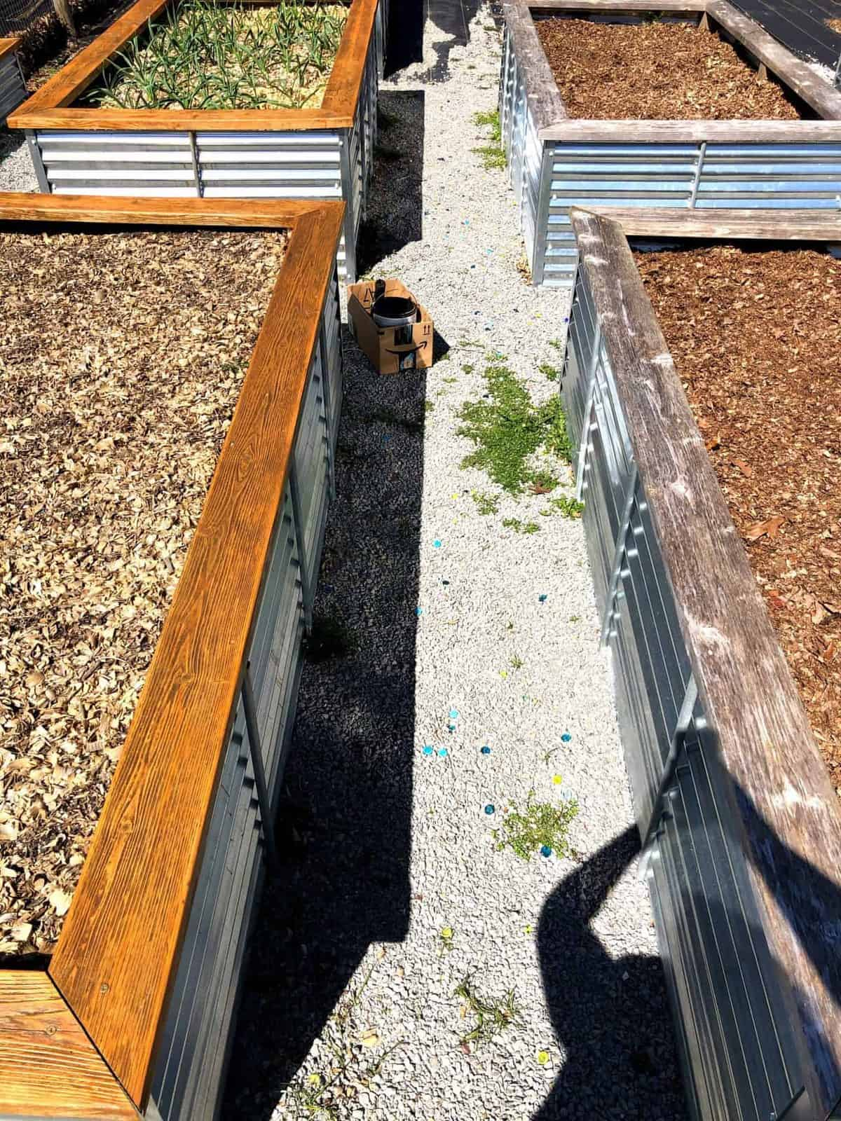 Four steel and cedar raised beds. Two of the beds have had stain applied to the cedar.