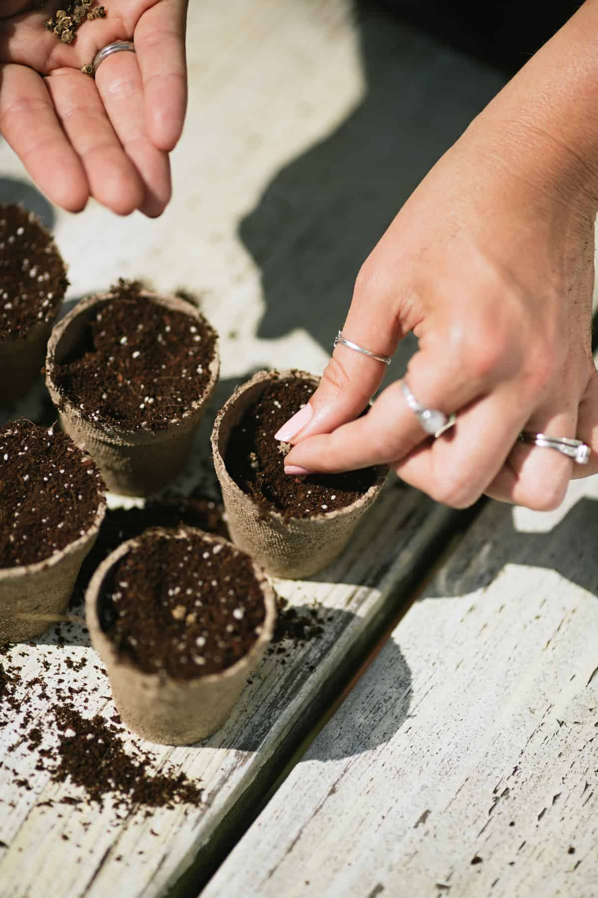 Hands putting seeds into peat pots filled with seed starting medium