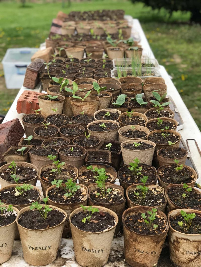 Close up of a table covered in seedlings
