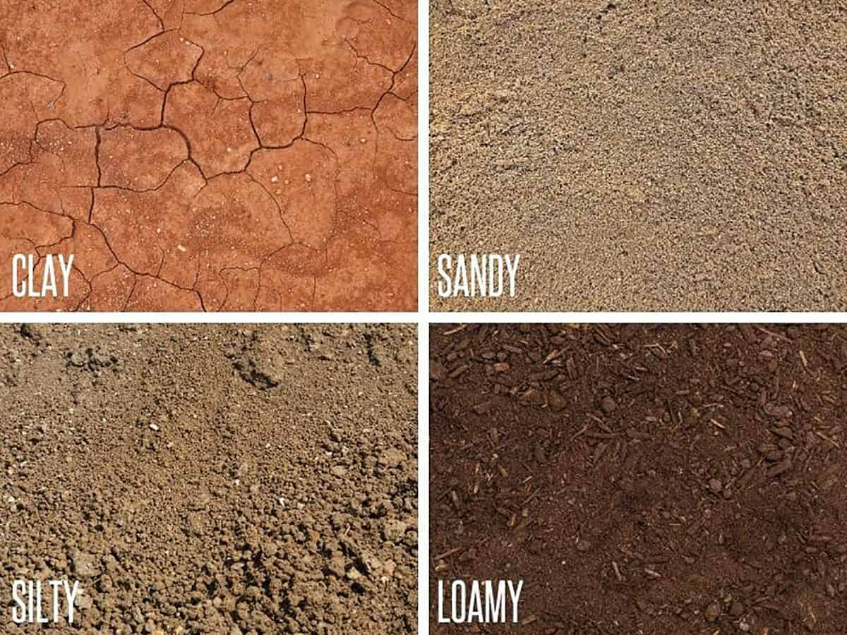 A quartered image shows each type of soil - clay, sandy, silty, and loamy.