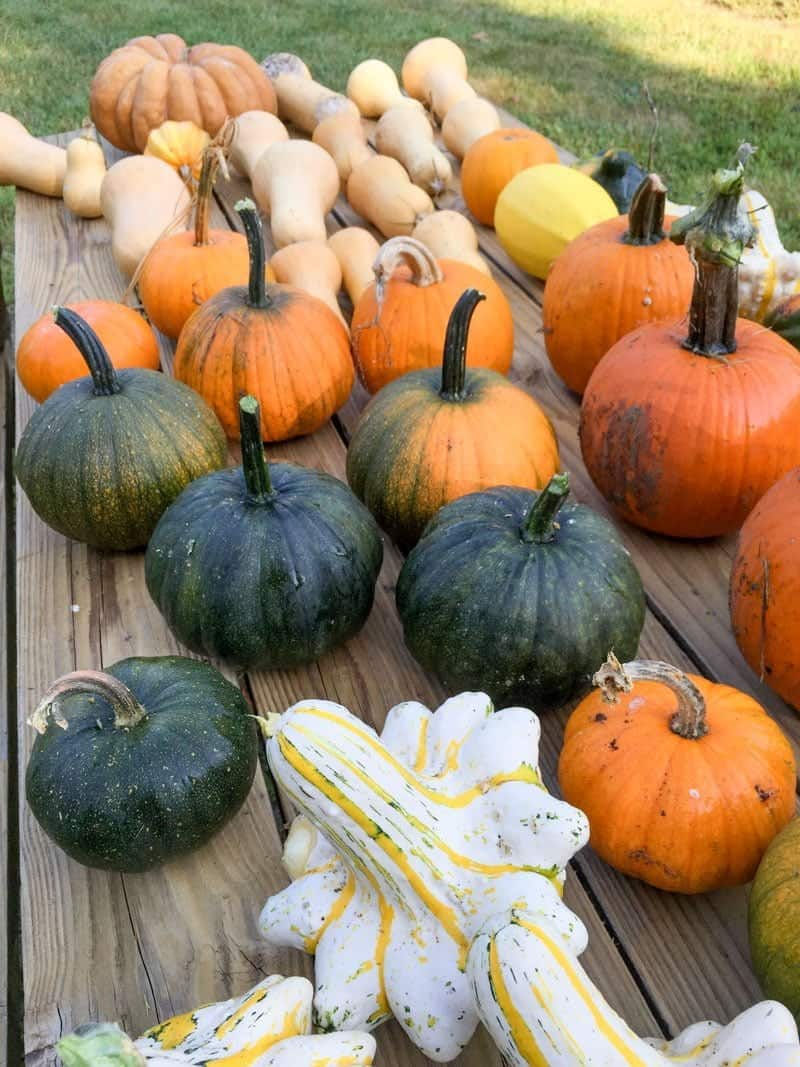 Various pumpkins and squash are arranged on a wooden table.