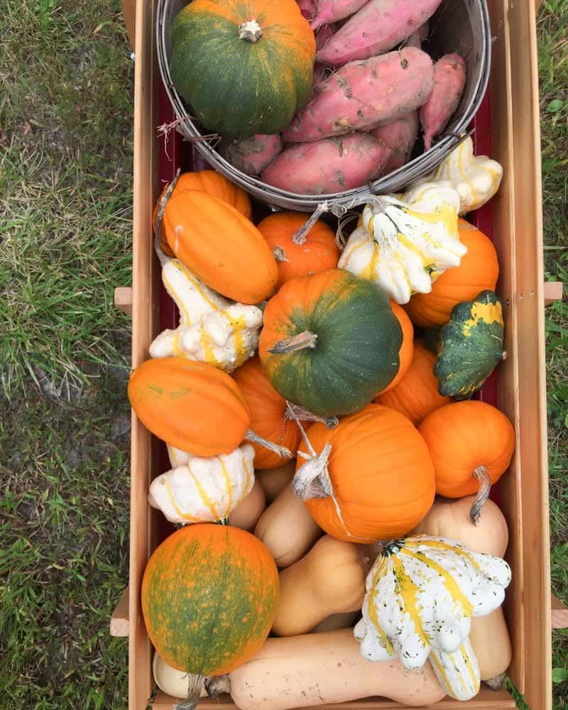 Various pumpkins and squash are piled in a box.