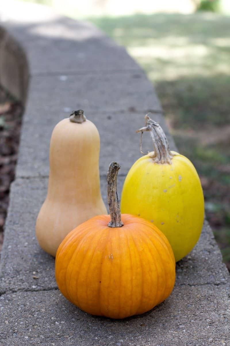 A butternut squash, spaghetti squash, and pumpkin sit on a concrete wall.