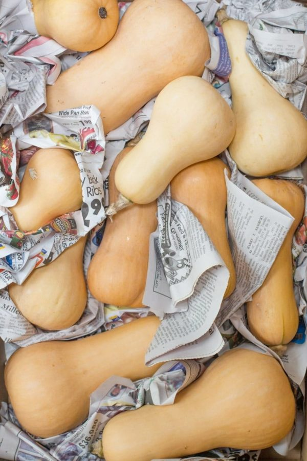 Butternuts are piled loosely layered with newspaper