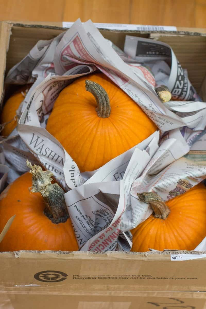 Pumpkins are wrapped in newspaper in a cardboard box.