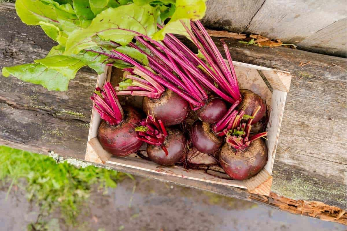 Red beets with their greens removed lay in a wooden crate