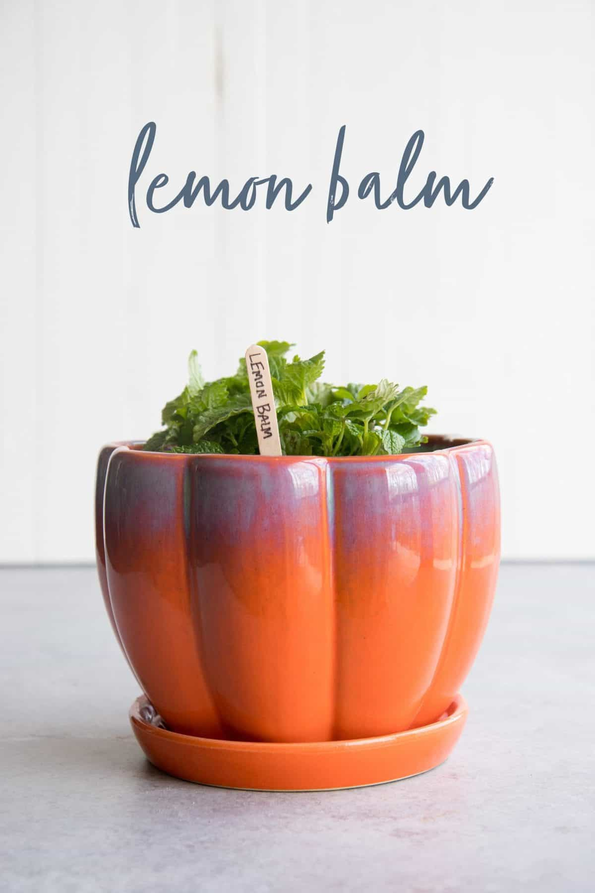 Lemon balm in a red-orange flowerpot, with a text overlay