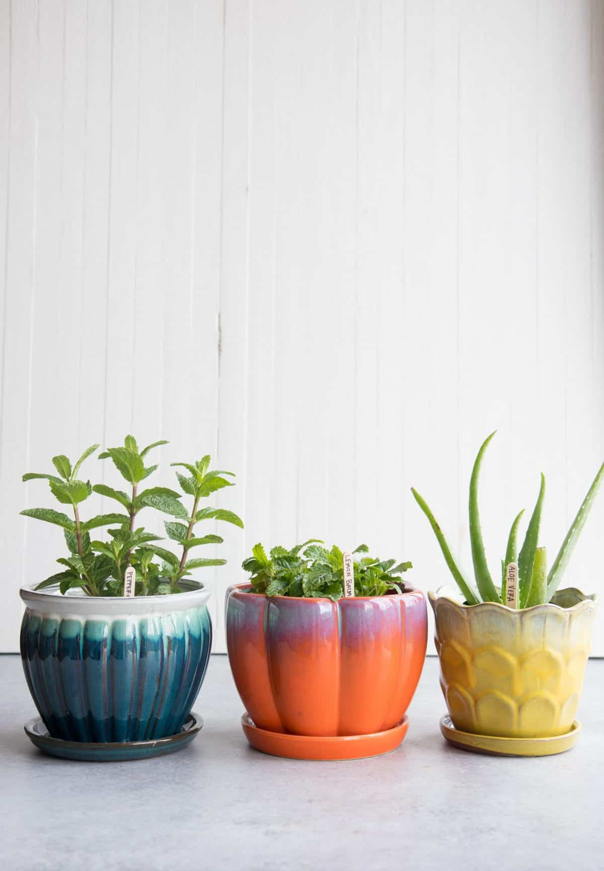 Three potted medicinal herbs: peppermint in a blue pot, lemon balm in a red-orange pot, and aloe vera in a yellow pot