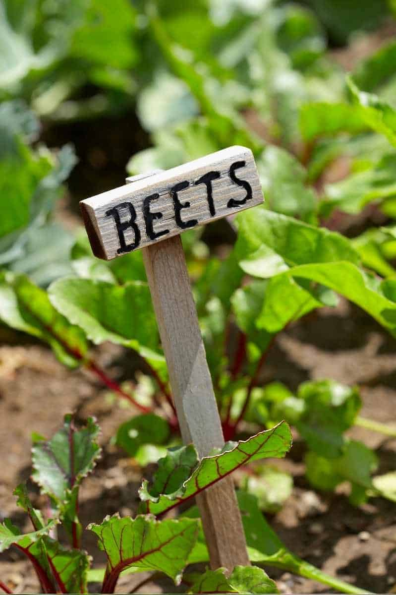 """A wooden sign in the garden reads """"Beets"""""""