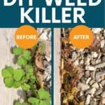 """A split image shows a plant before and 15 minutes after spraying with homemade weed killer. A text overlay reads """"All-Natural! DIY Weed Killer."""""""
