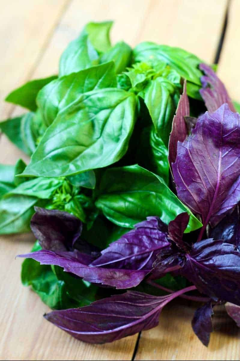 Harvested green and purple basil lays on wooden boards