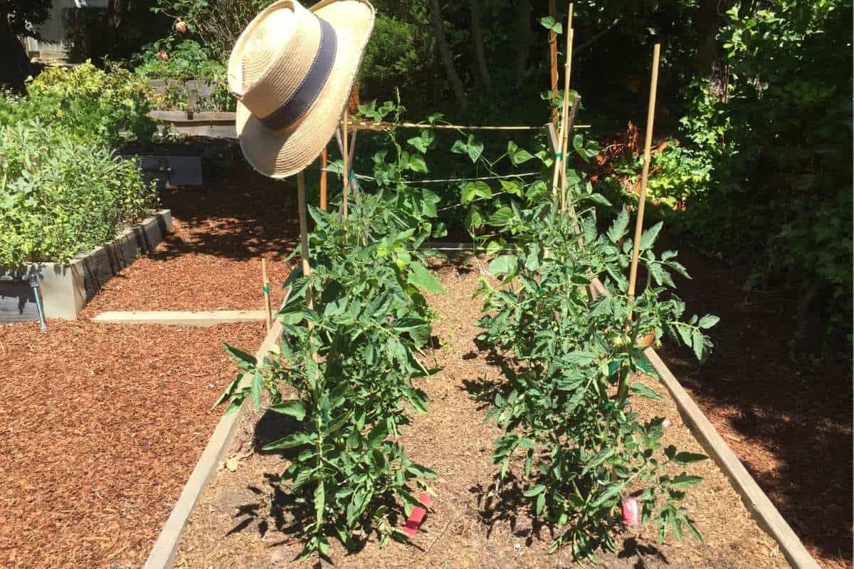 A sun hat rests on a garden trellis