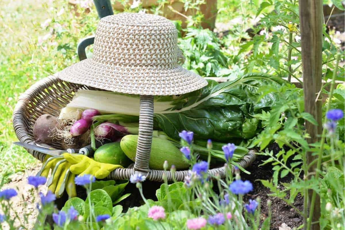A gardening hat sits on a basket full of harvested garden vegetables