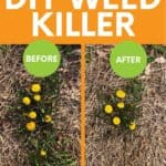 """A split image shows a dandelion before and 3 hours after spraying with homemade weed killer. A text overlay reads """"All Natural! DIY Weed Killer."""""""