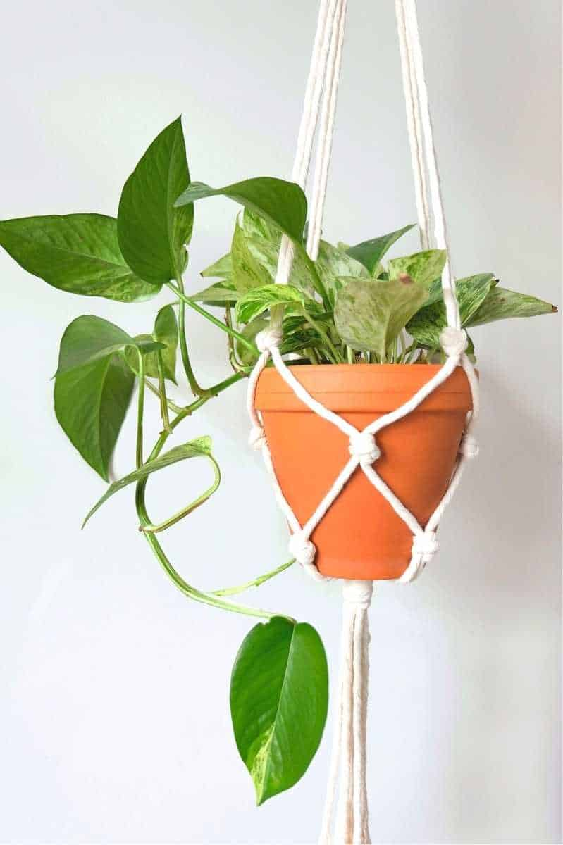 A marble queen pothos in a terracotta pot hangs in a white plant hanger