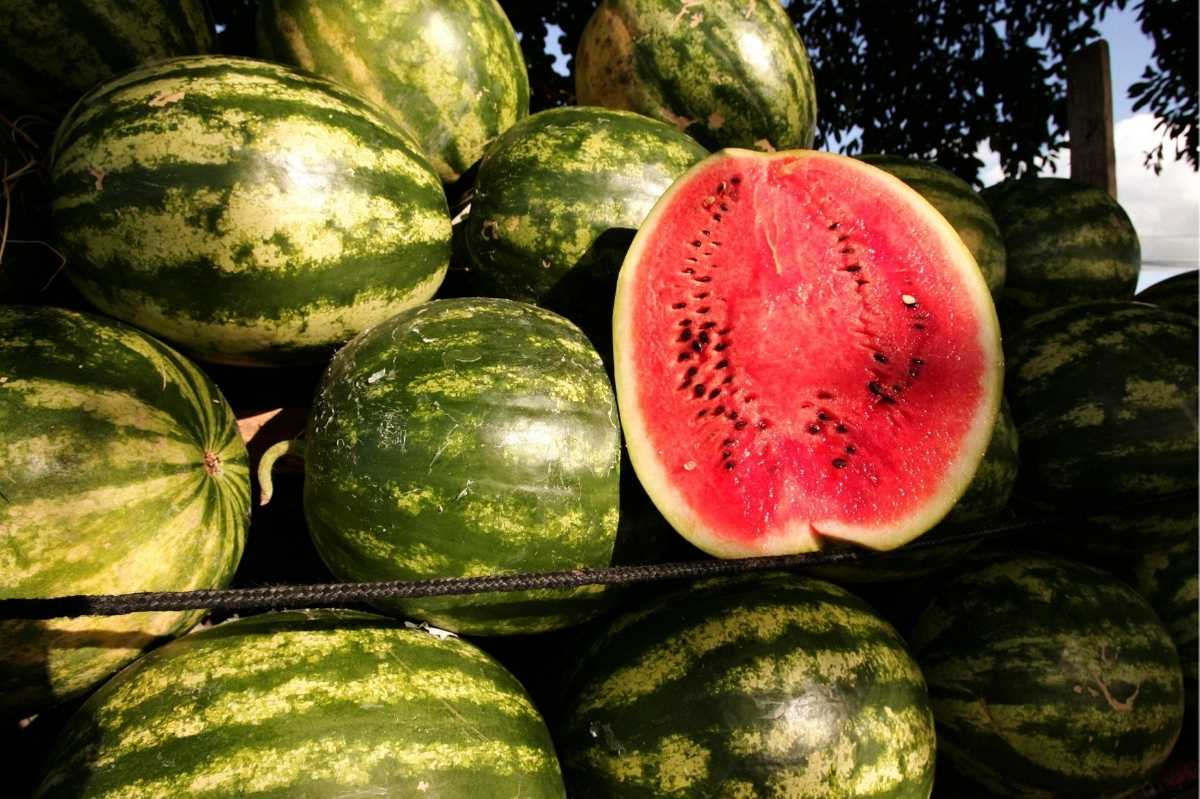 Ripe watermelon are piled on top of each other. One watermelon is cut in half to show its red flesh and black seeds.