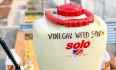 """A backpack sprayer labeled """"vinegar weed spray"""" sits outside"""