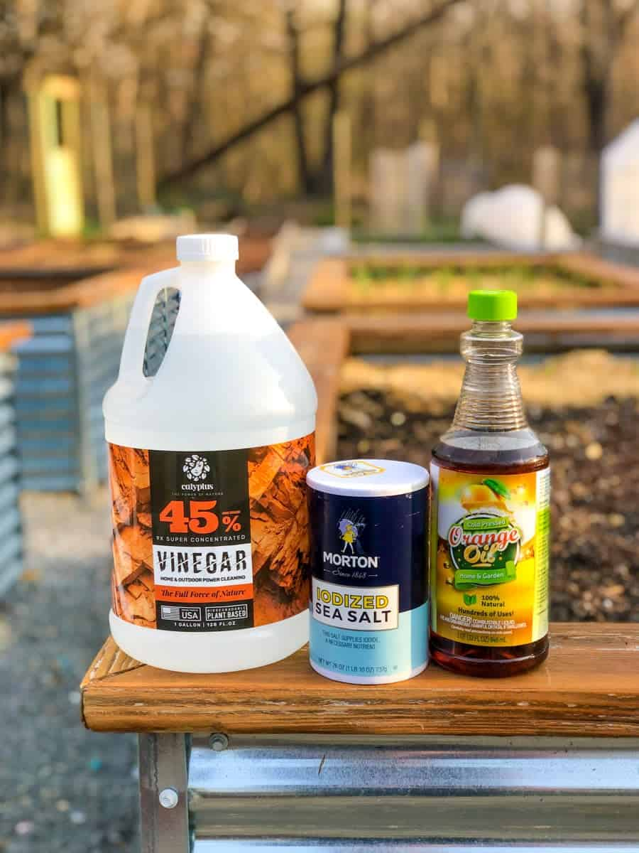 The ingredients for homemade weed killer - horticultural vinegar, salt, and orange oil - are lined up on the edge of a garden bed