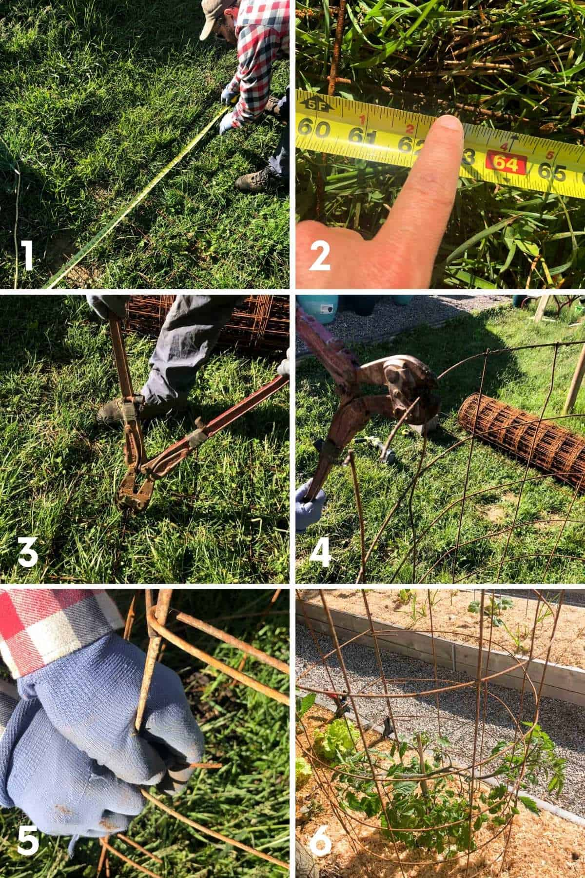A collage image shows the steps for making a DIY tomato cage