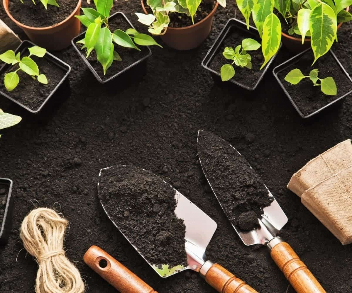 Two trowels rest on soil, surrounded by baby plants