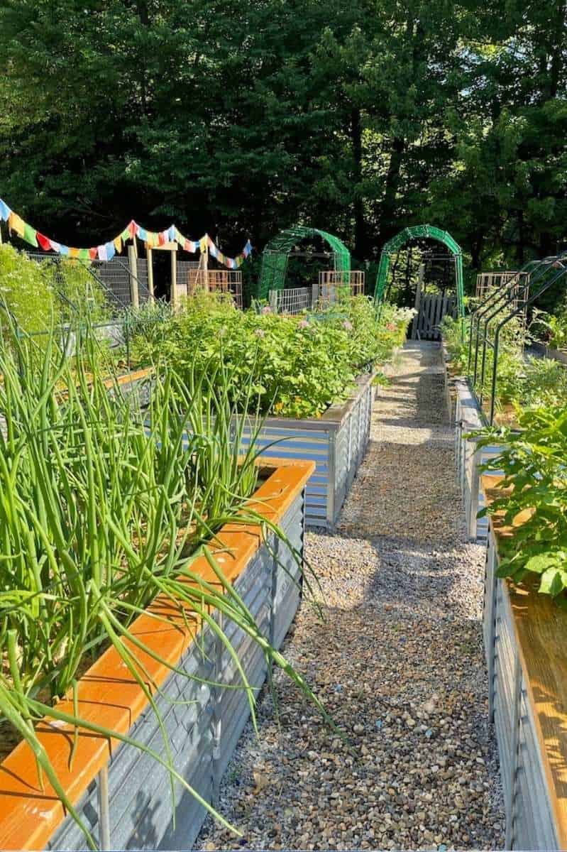 Raised bed garden, and all the weeds have been removed from the aisles
