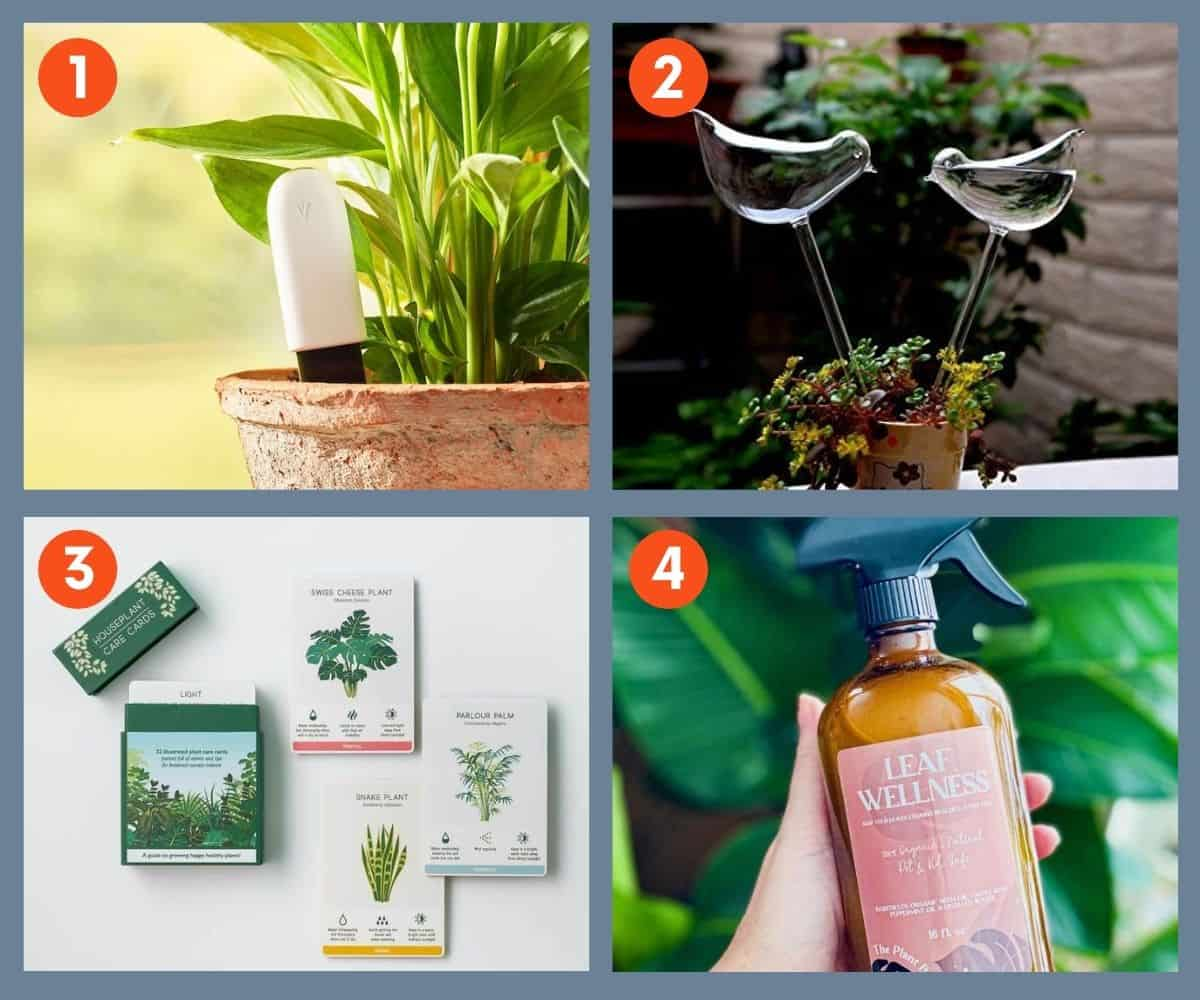 A collage of items for plant care