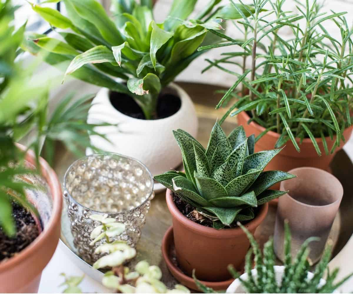 A collection of houseplants in a varieties of planters