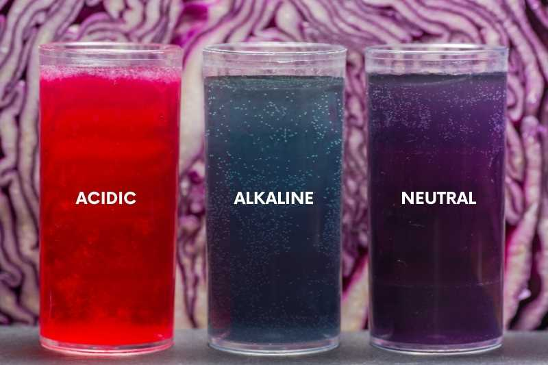 Red cabbage test for soil pH. Three jars show acidic, alkaline, and neutral results