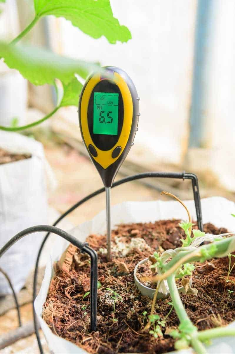 A yellow soil pH meter reads 6.5 in a grow bag