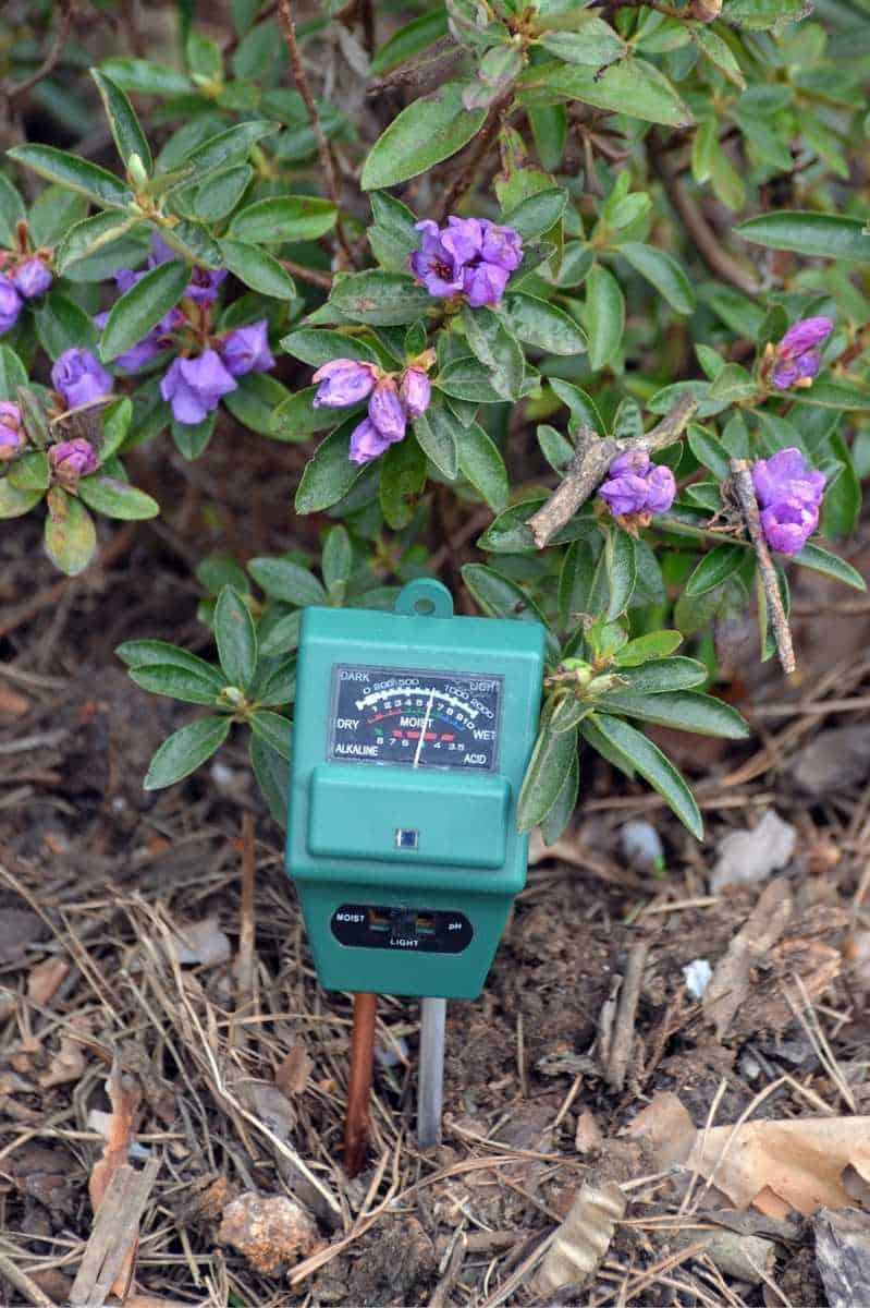 A green soil meter next to a purple flowering plant