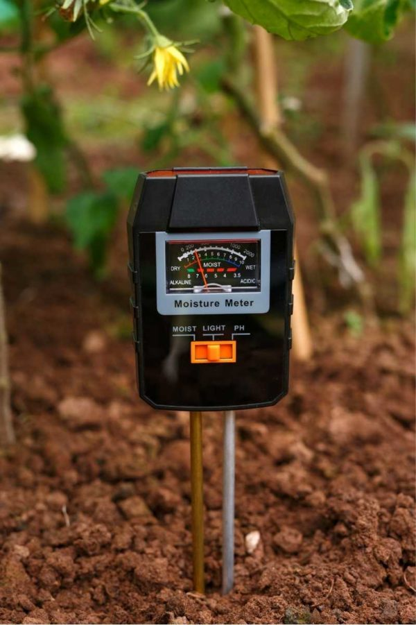 A moisture meter next to a tomato plant