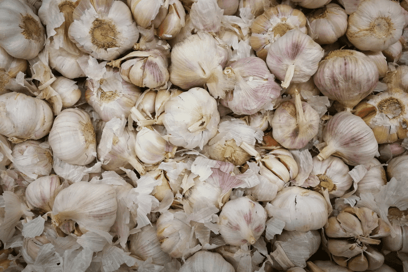 Cured heads of garlic are piled on top of each other
