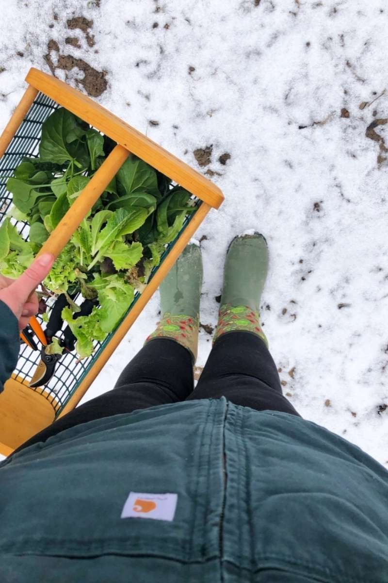 A gardener holds a harvest basket filled with fresh greens. They are wearing boots and standing in the snow