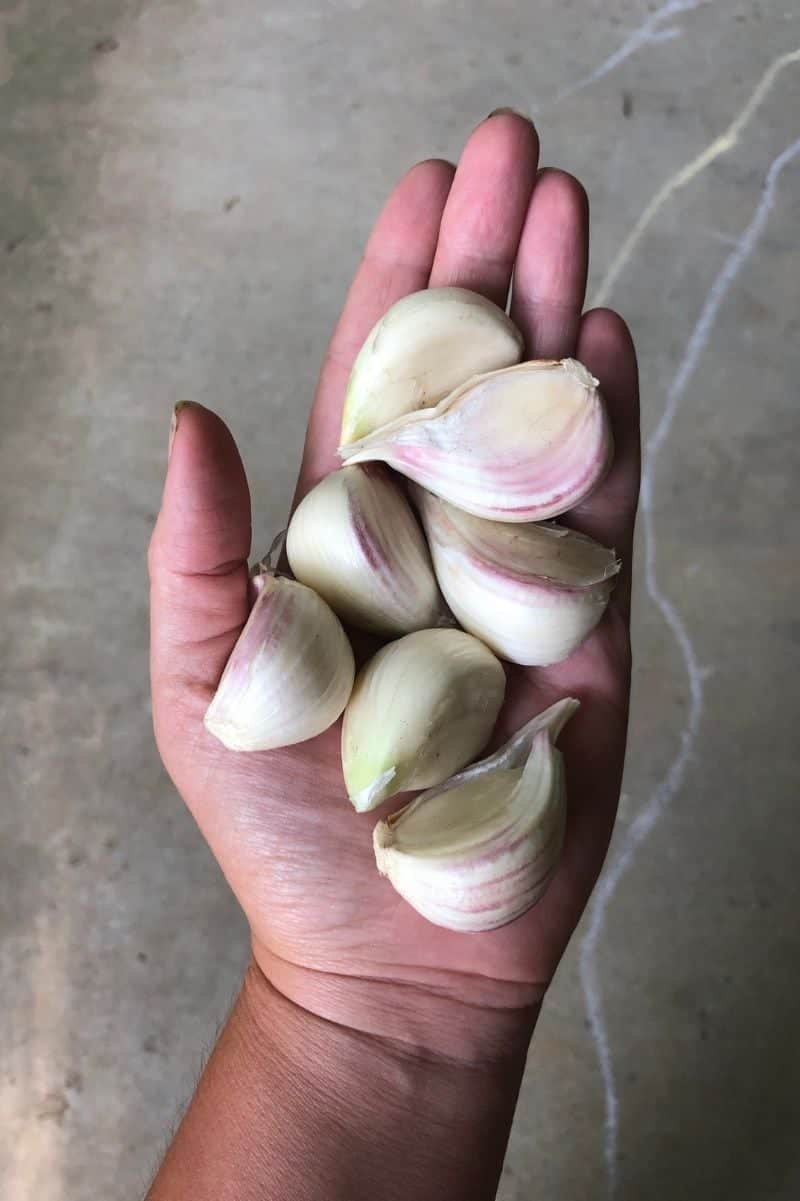 A hand holds out a palmful of garlic cloves