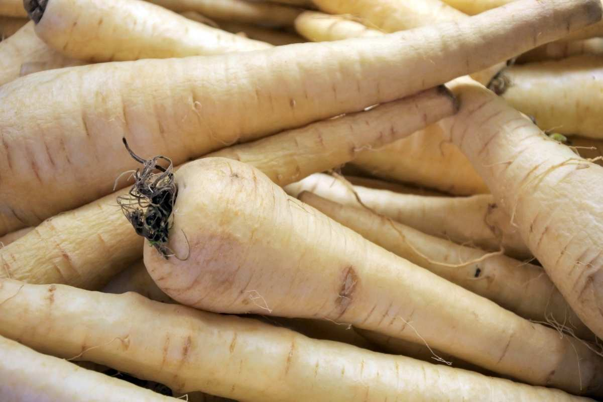 A pile of parsnips